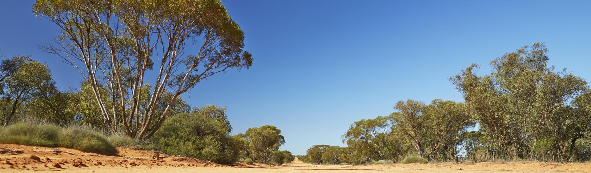 布羅肯山 (Broken Hill)蒙哥國家公園(Mungo National Park)小徑