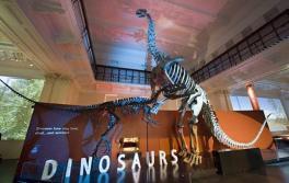恐龍,澳洲博物館(Australian Museum)