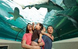 雪梨水族館(SEA LIFE Sydney Aquarium),達令港
